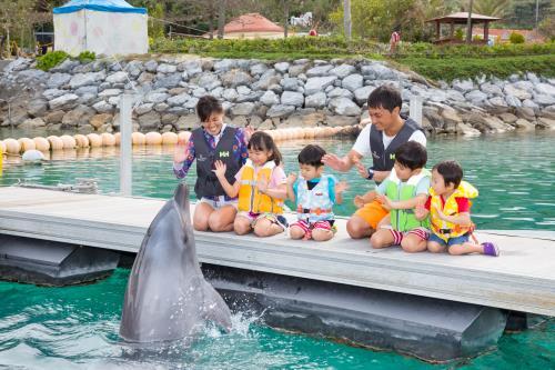 【期間限定】イルカにタッチ♪先着20名様スマイルドルフィンへご招待 ぽかぽか沖縄でイルカと遊ぼう!<2泊~>