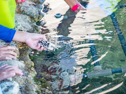 【ゴールデンウィーク】【恩納村 サンゴの村宣言】~沖縄の海を守ろう~ 5月2日・3日はサンゴ植え付け体験開催<3泊~>