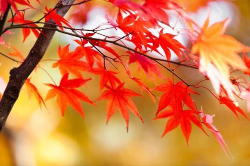 【2名様利用限定 先着順】秋の東京散策スペシャルプラン (朝食無料でプレゼント)